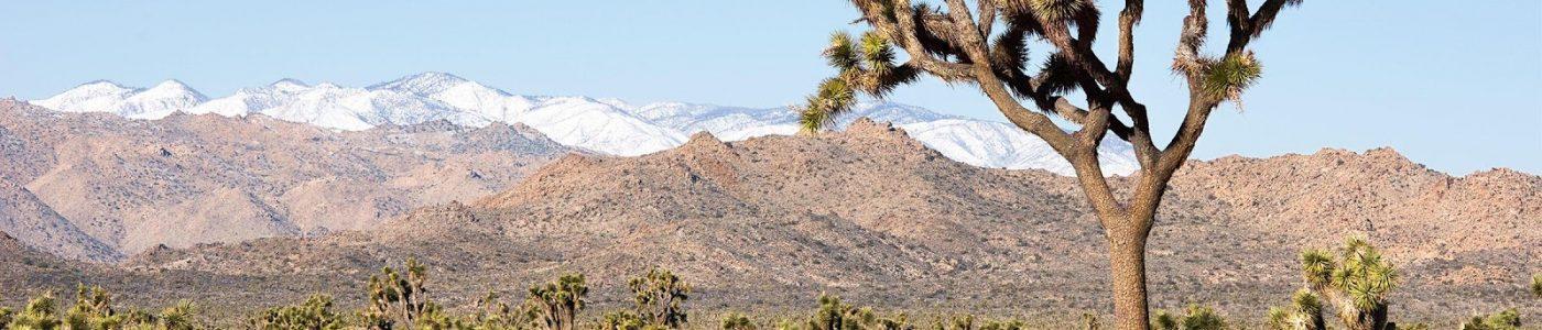 View of Joshua Tree National Park